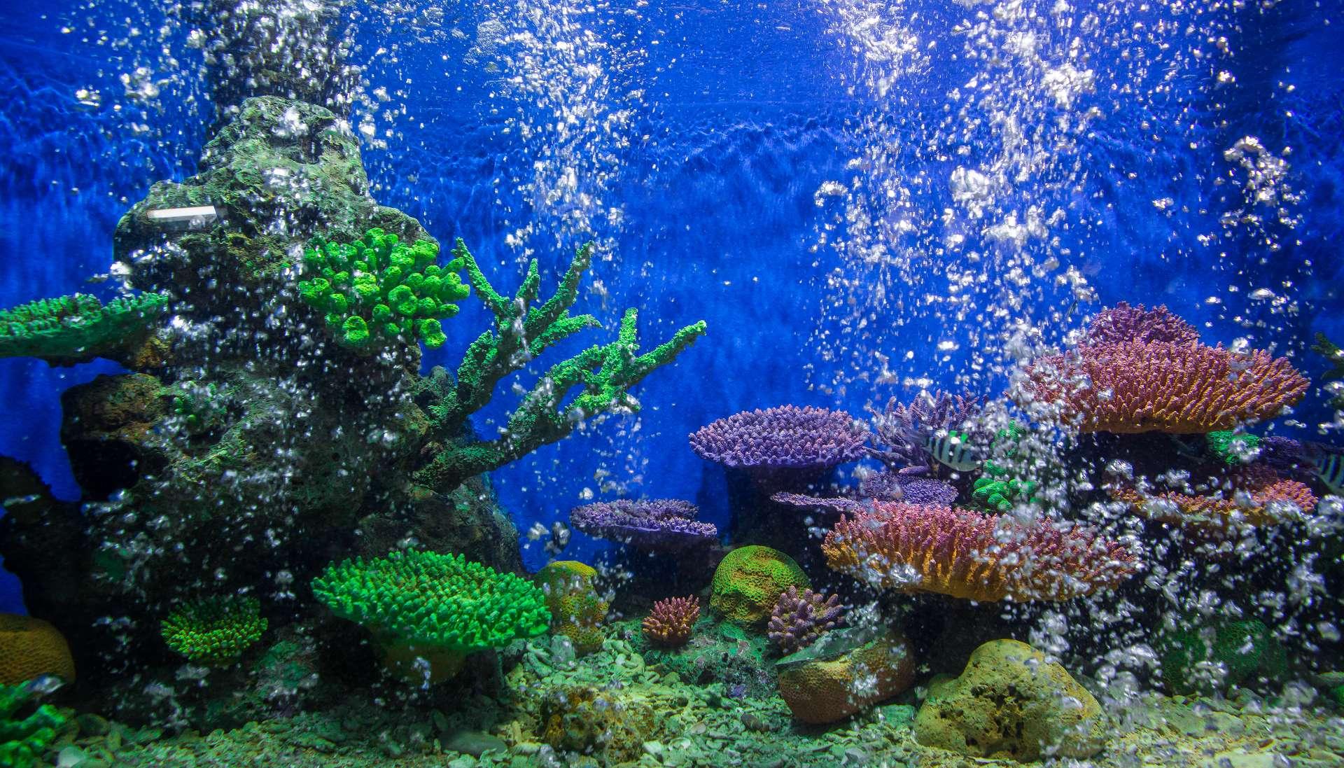 Mall of Oman, Aquarium