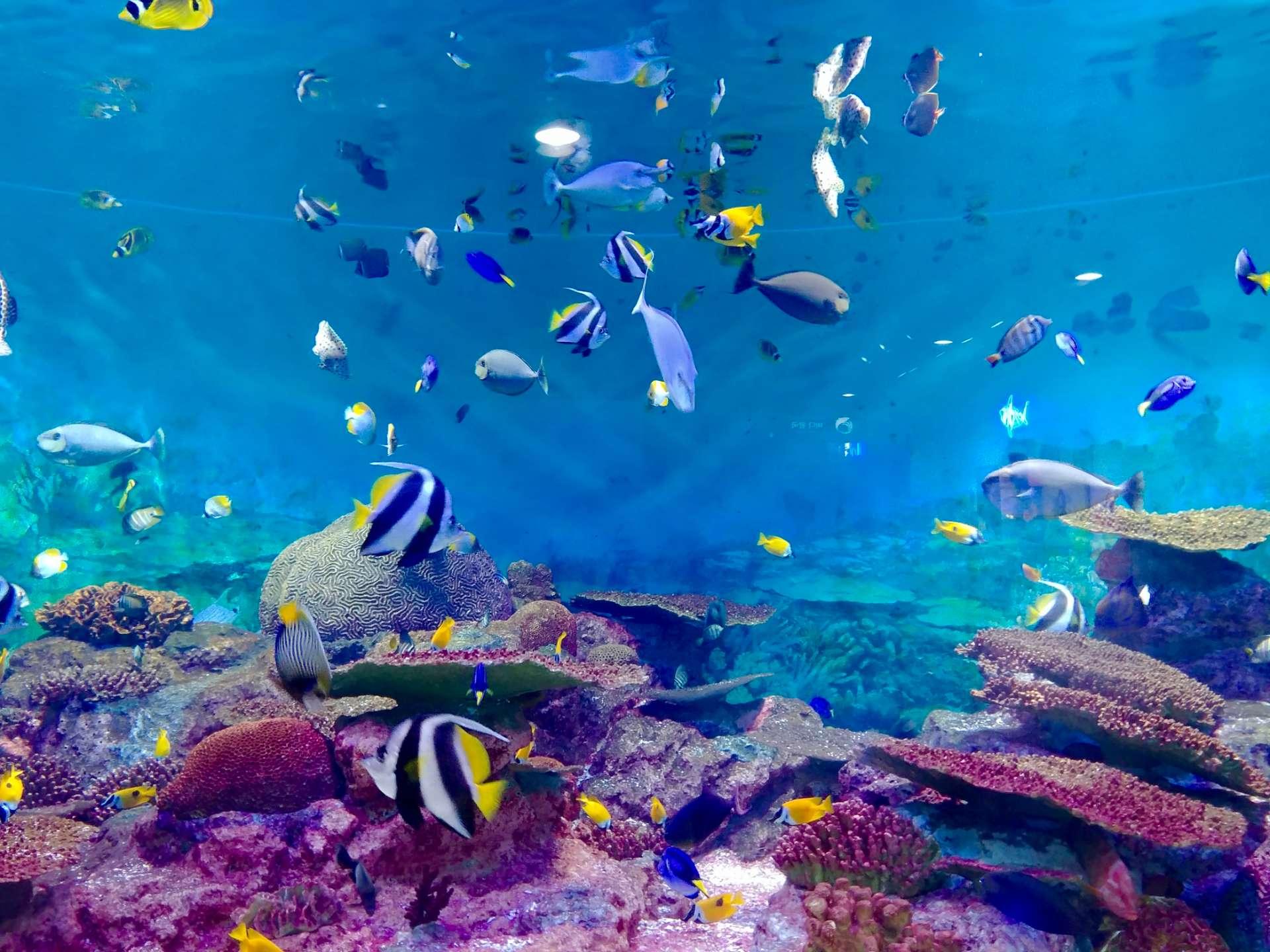 Aquarium Operations