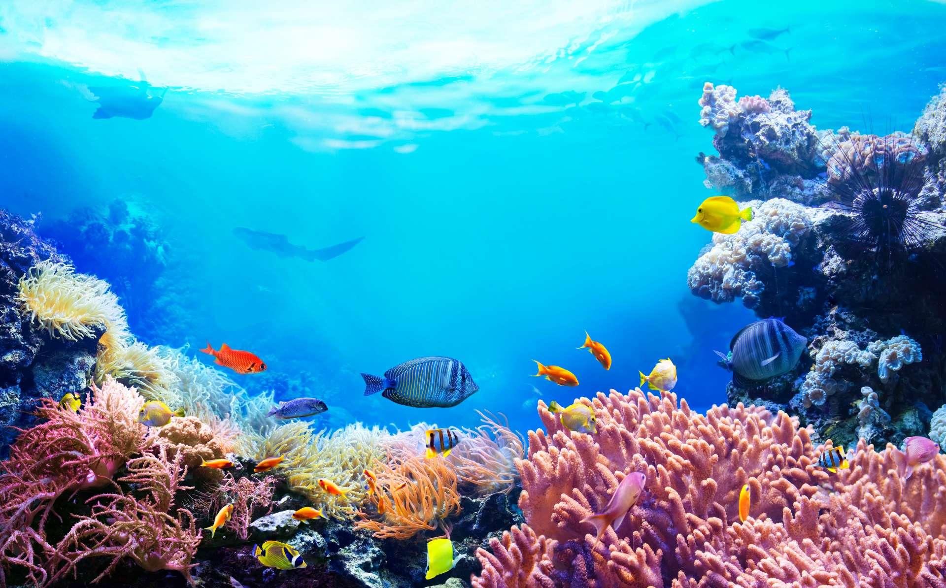 Oceanarium Mauritius